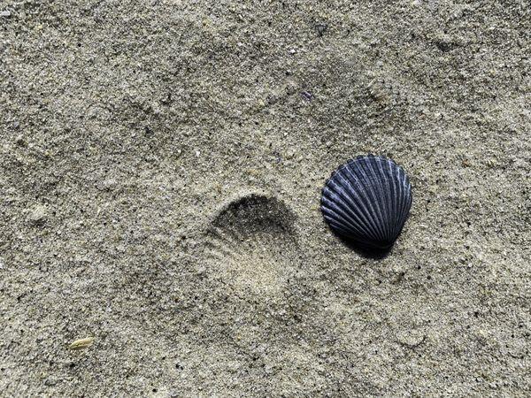 Seashell and imprint thumbnail
