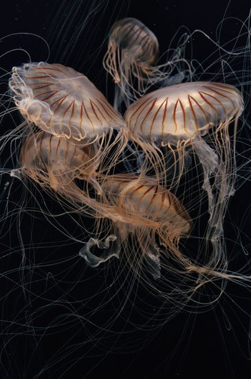 14 Fun Facts About Jellyfish