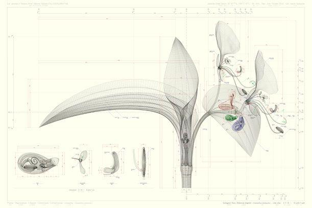 Macoto Murayama's Intricate Blueprints of Flowers