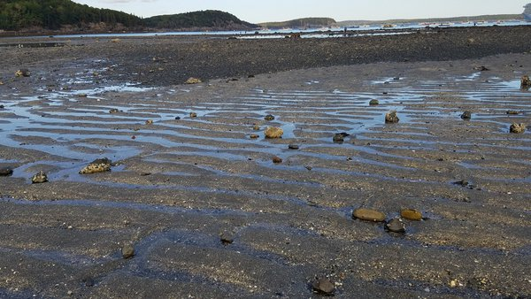 Ripples in the sand on the bar between Bar Harbor and Bar Island. thumbnail