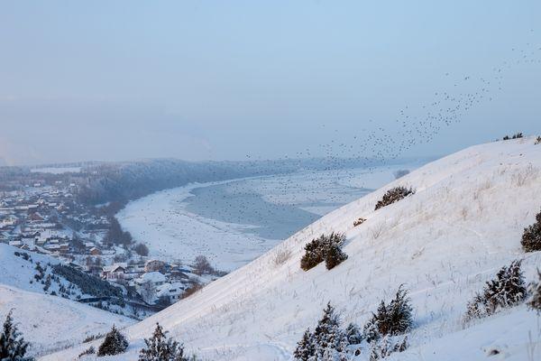 Winter bird's whirlwind thumbnail