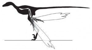 20110520083211Microraptor-shadow-wing-300x165.jpg