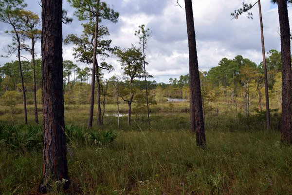 The Swamps of Mississippi thumbnail