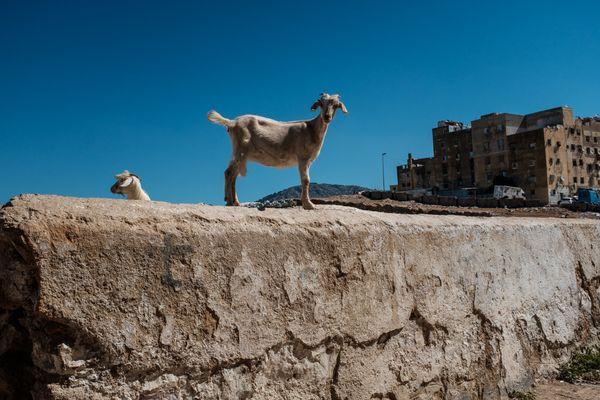 street scene in Fes, Morocco thumbnail