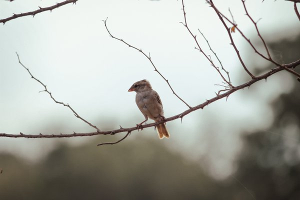A bird is sitting on branch thumbnail