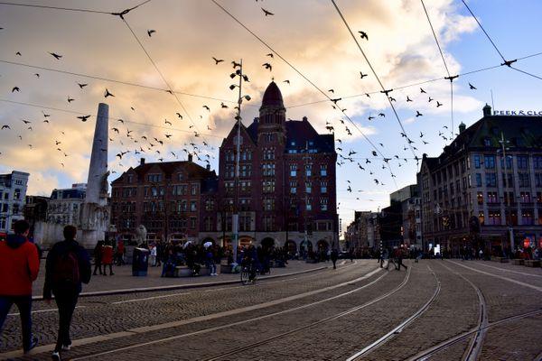 Birds take flight in Amsterdam during golden hour thumbnail