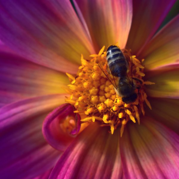 Worker bee thumbnail