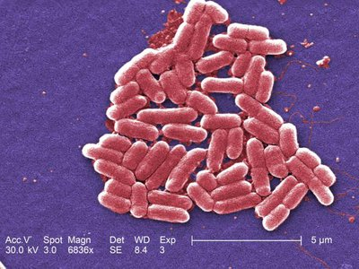 By storing data in bacteria like E. coli, the data is protected by the same machinery that the cell uses to protect its own DNA.