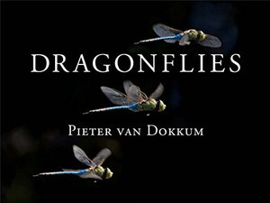 Preview thumbnail for Dragonflies: Magnificent Creatures of Water, Air, and Land