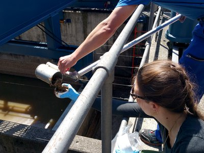 Intrepid Swiss scientists sampling wastewater at a treatment plant in Zürich