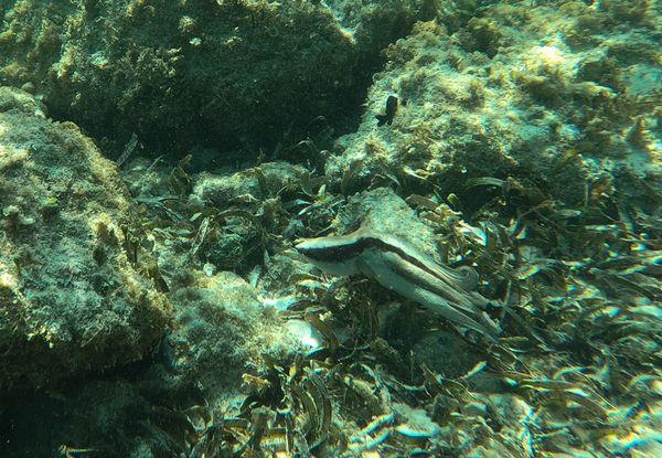 Octopus in Aruba 7 thumbnail