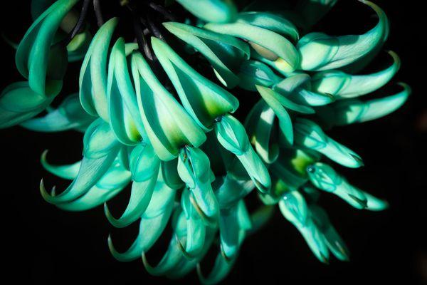 Strange Blue Flower thumbnail