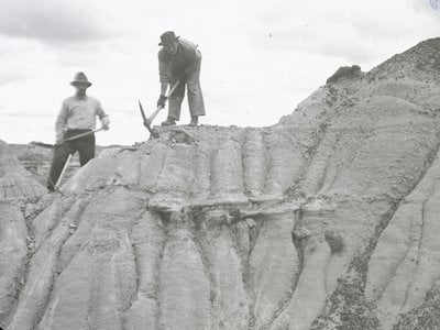 Using heavy picks, Smithsonian researchers in 1923 worked on excavations in Dinosaur National Monument on the border of Colorado and Utah.