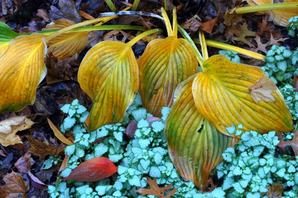 Autumn's Last Hurrah thumbnail