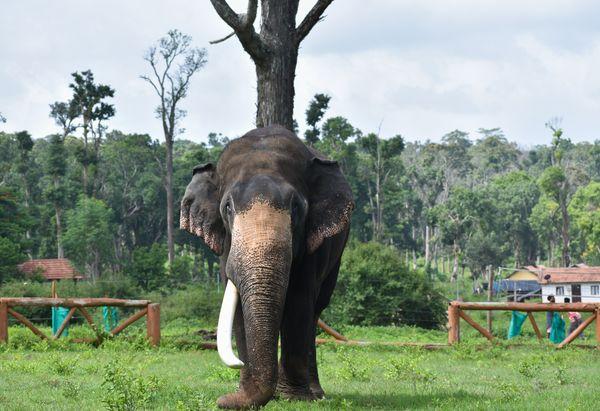 Elephant thumbnail