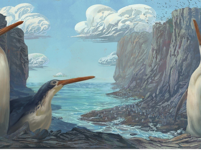 """Though the fossil shared a resemblance to others found in the region, it had much longer legs. The team decided to name the new species Kairuku waewaeroa, which means """"long-legged"""" in the Maori language."""