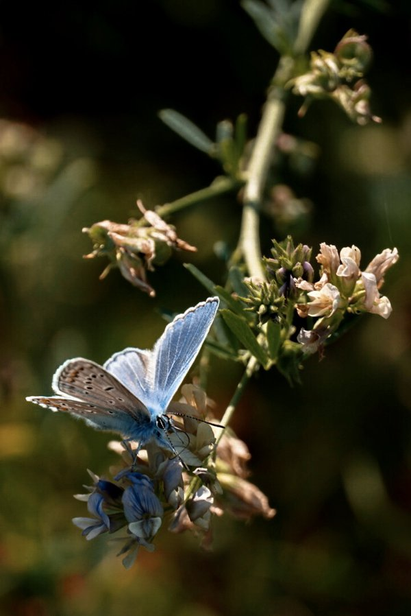Beautiful blue butterfly by a flower thumbnail