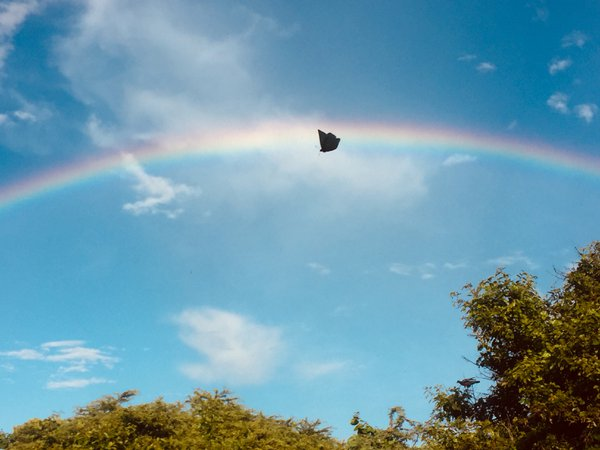 Butterfly and rainbow, a happy sky thumbnail