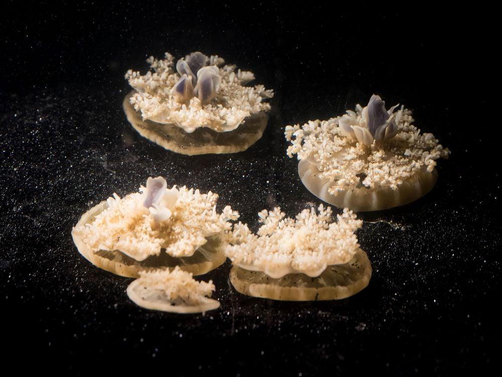 Jellyfish Sleep