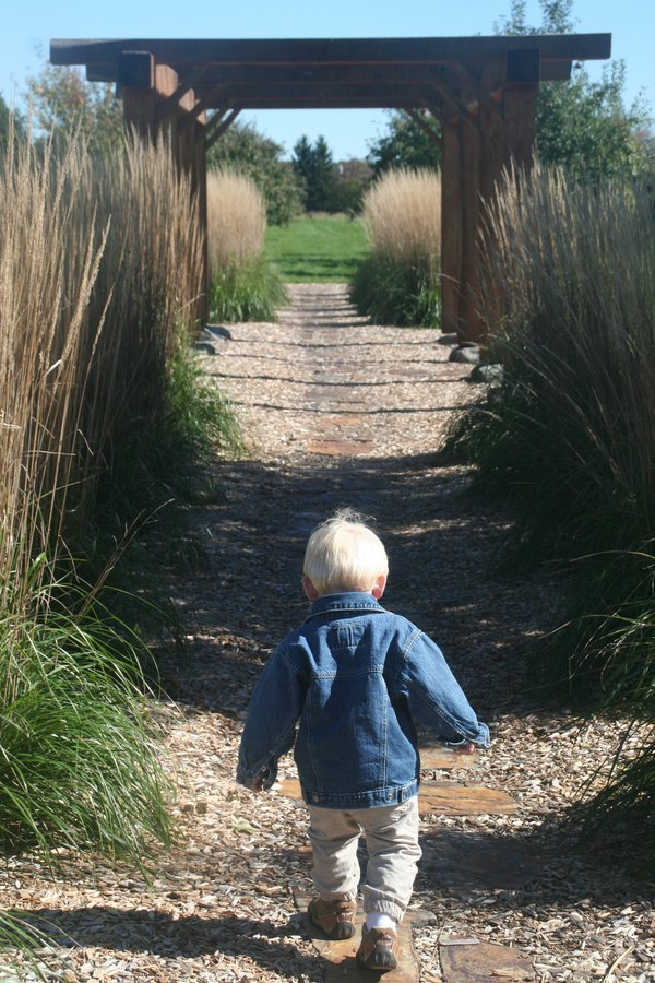 Life Journey. A little boy running through a pergola with grasses and a path at an apple orchard in Wisconsin thumbnail