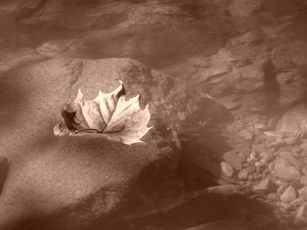 Leaf Floating in Creek thumbnail