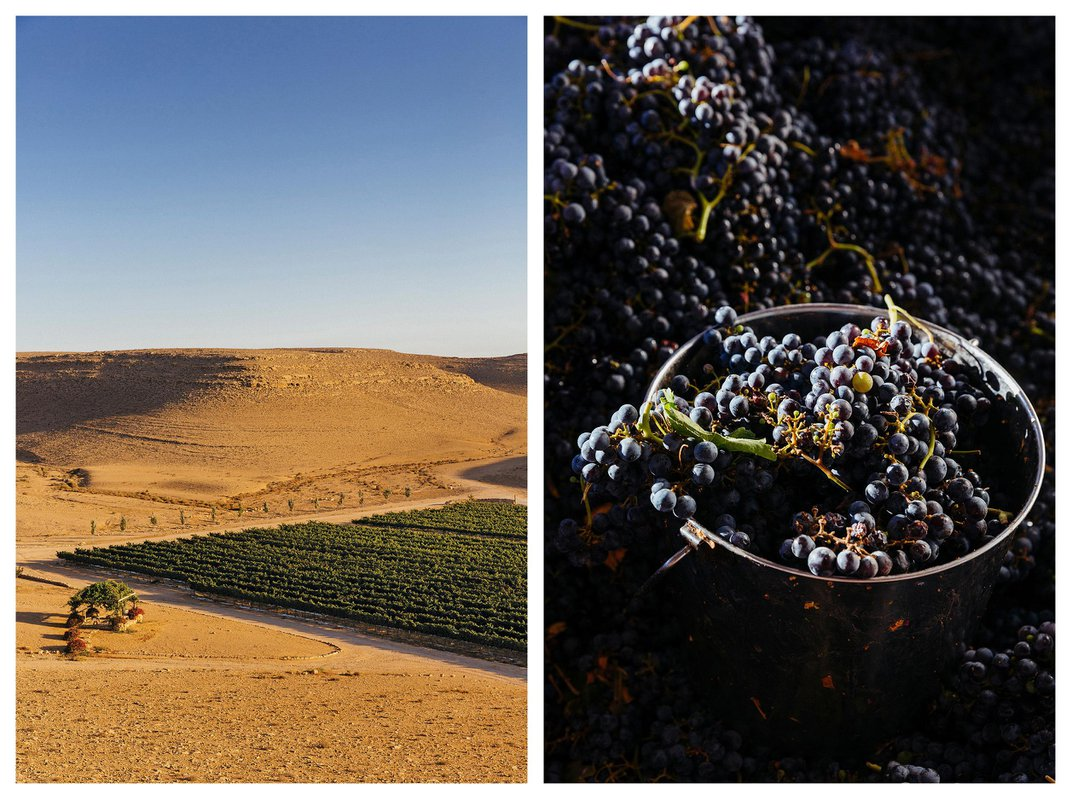 Why Wines From Israel's Negev Desert May Represent the Future of Viticulture