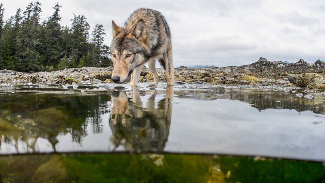 No One's Afraid of the Big, Bad Wolf—And That's a Problem