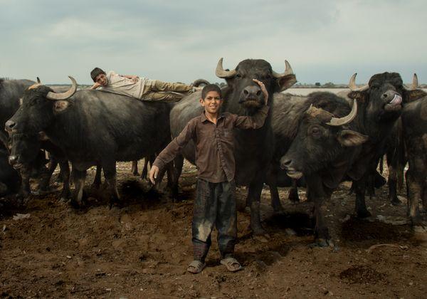Buffaloe's land thumbnail