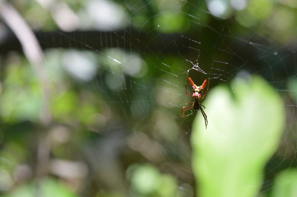Spider on resting on web thumbnail