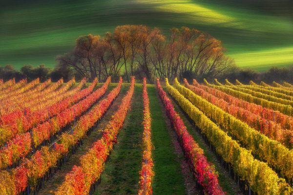 Autumn Pallete of Moravia thumbnail