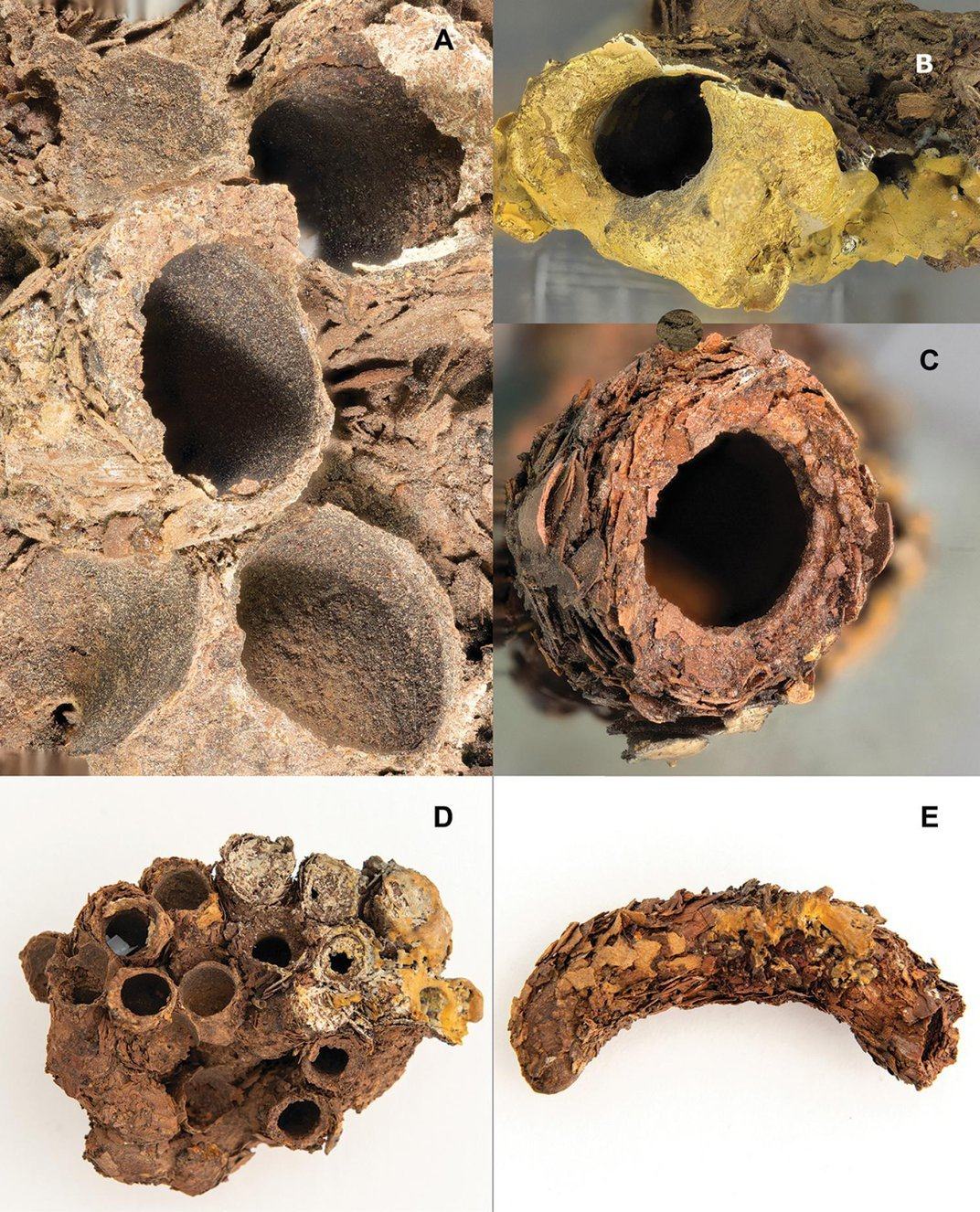 150-Year-Old Mummified Bee Nests Found in Panama City Cathedral