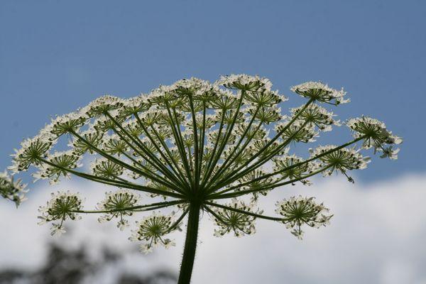 Flower in Monet's Garden thumbnail