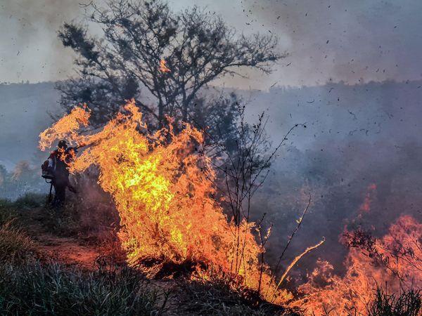 Nature on Fire thumbnail