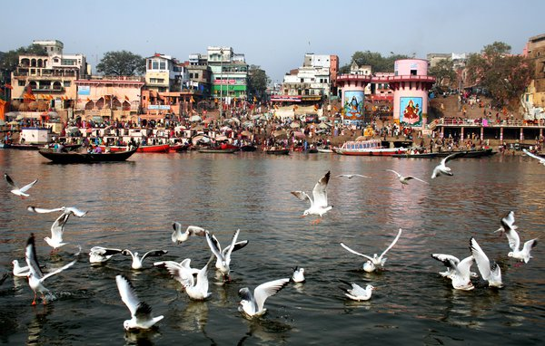 title :VARANASI the winter morning at varanasi,many migreded birds are present their thumbnail