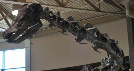 sauropod Diplodocus