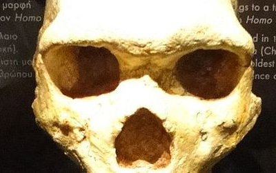 This skull from the Petralona Cave is one of the few hominid fossils found in Greece that date to the Middle Pleistocene.