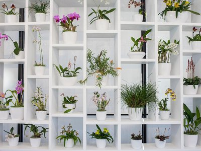 """""""The Hirshhorn's unique modernist architecture offers a striking backdrop for the orchids' brilliant color,"""" says the museum's director Melissa Chiu."""