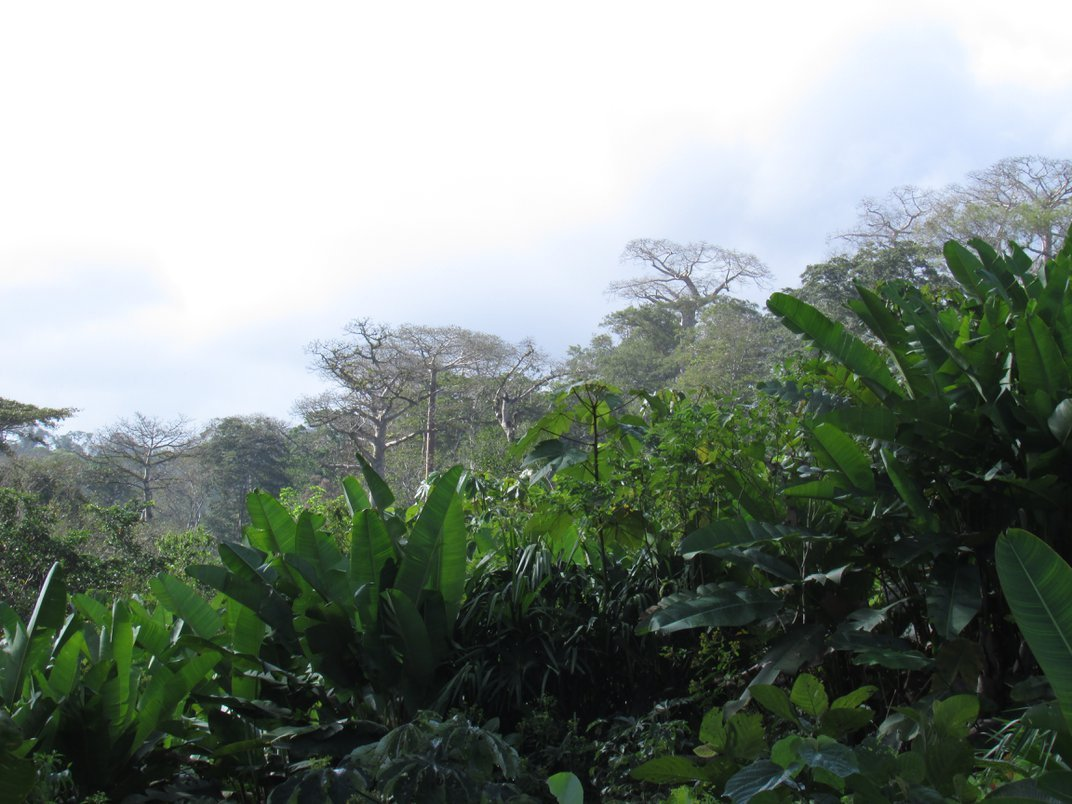 Cómo Los Científicos y Grupos Indígenas Pueden Aliarse Para Proteger Los Bosques y el Clima