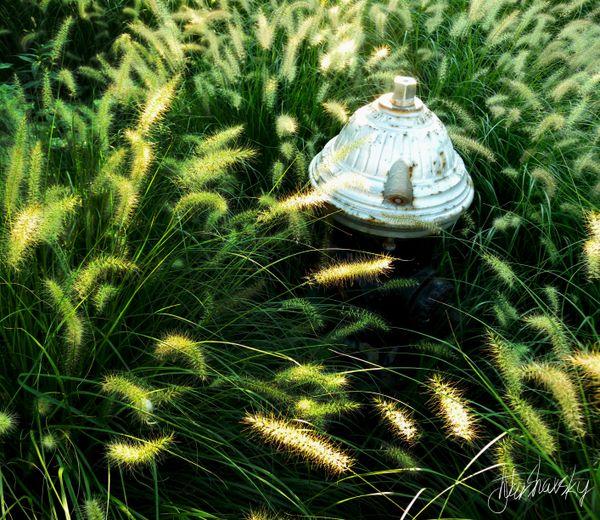 Grassy hydrant thumbnail
