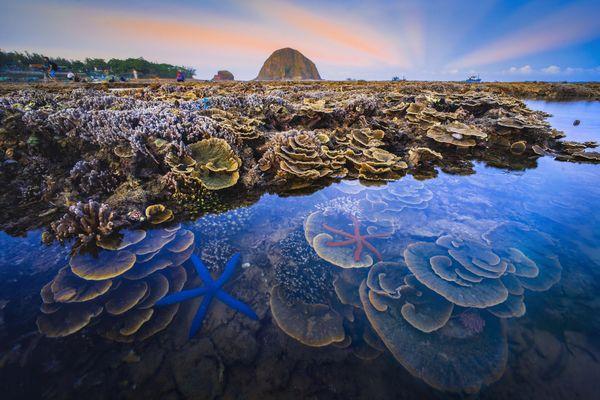 Hon Yen marine ecosystem thumbnail