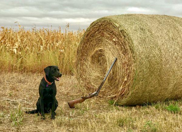 Hunting Dog in South Dakota thumbnail