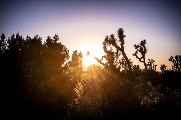 Desert Sunset thumbnail