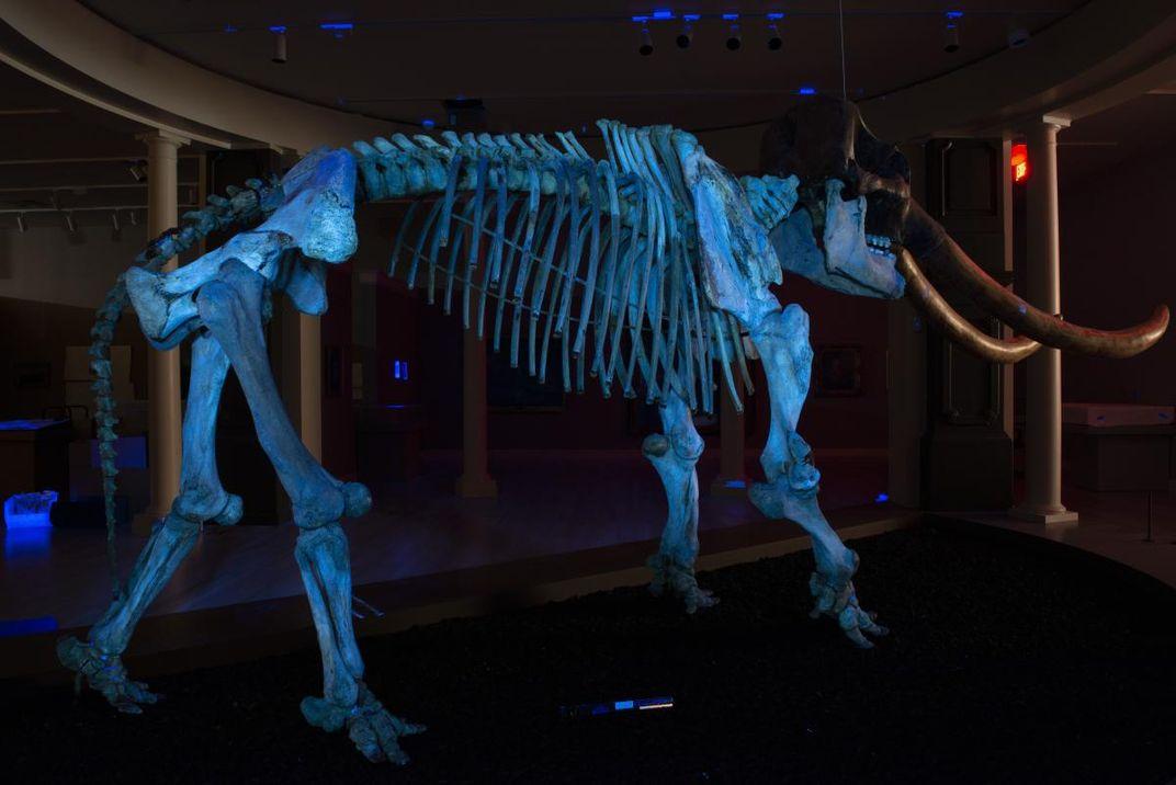 An ultraviolet photograph of a mastodon.