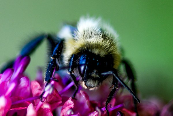 Munching on a Cone Flower thumbnail