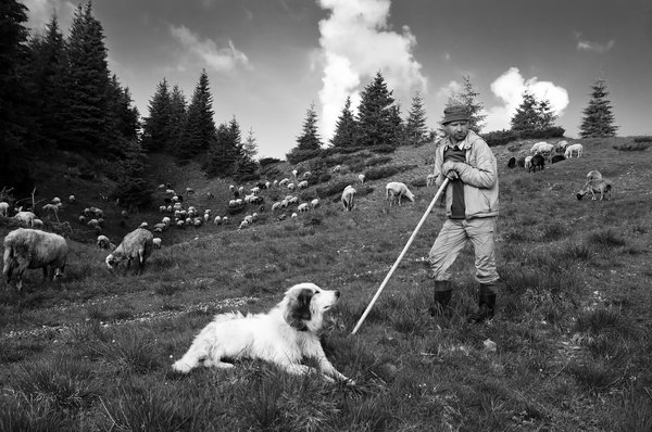 Shepherd and his assistant thumbnail