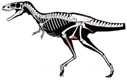 20110520083201raptorex-skeleton.jpg