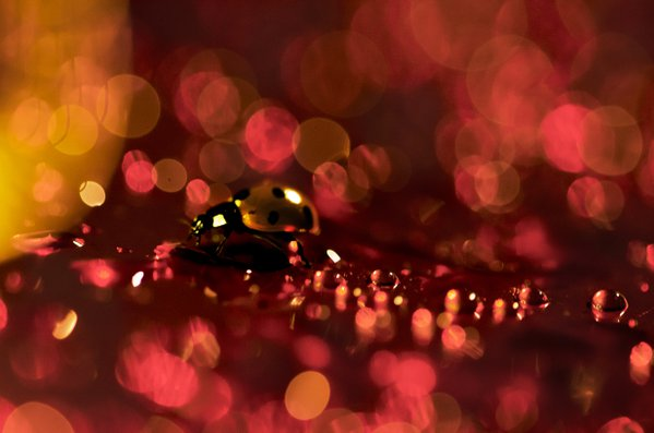 A running ladybug thumbnail
