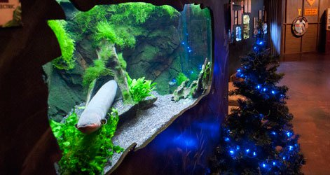 Sparky, the electric eel, and his Christmas tree.