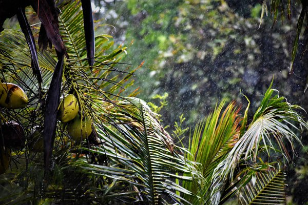 Singing in the Rain thumbnail