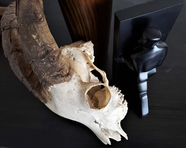Skull Still 5 thumbnail